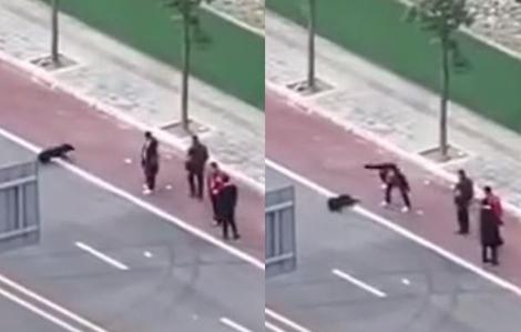 Chính quyền một số địa phương Trung Quốc giết chó để phòng dịch coronavirus