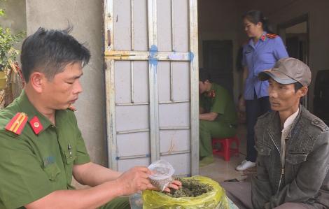 Tạm giữ một người đàn ông trồng hơn 1.000 cây cần sa cho... gà ăn