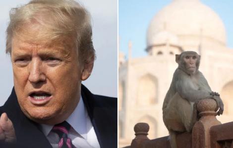 Ấn Độ sợ ông Trump bị khỉ tấn công khi đến thăm Taj Mahal