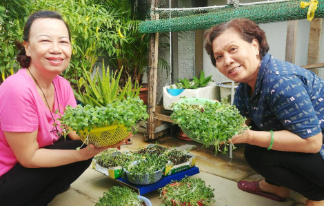 Ủ phân để trồng rau cho gia đình: Dễ ợt!