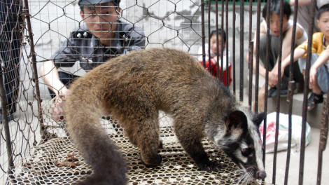 Trung Quốc cấm vĩnh viễn việc mua bán, tiêu thụ động vật hoang dã
