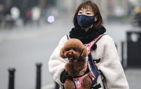 Hồng Kông phát hiện dấu vết virus gây COVID-19 ở thú cưng