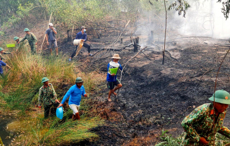 Đốt cỏ, đốt rụi luôn 10 héc ta rừng tràm
