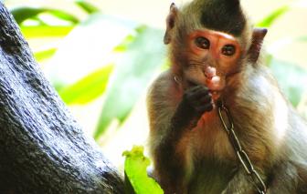Giải cứu thú hoang trong nhà dân ở Sài Gòn