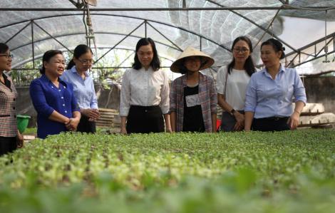 """Cận cảnh vườn rau chuẩn """"6 không"""" giữa lòng Sài Gòn"""