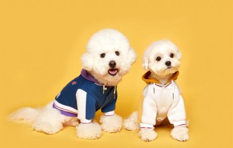 Thời trang may mặc cho thú cưng phát triển tại Hàn Quốc