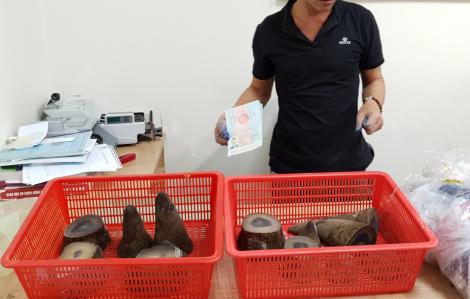 Thu giữ hơn 6,2kg sừng tê giác châu Phi
