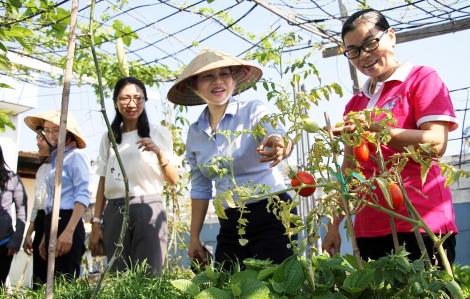 Ủ phân trồng rau xanh, lợi ích kép và hơn thế nữa