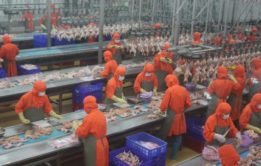 Thịt gà chế biến Việt Nam được phép xuất khẩu sang Nga