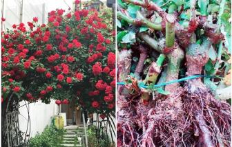 Chuộng hồng ngoại, mua phải hồng thải loại