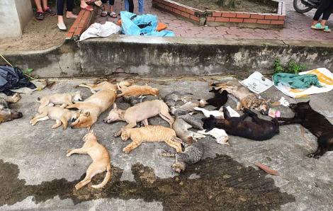 Bắt nhóm trai làng thực hiện cả trăm vụ đánh bả khiến chó mèo chết hàng loạt