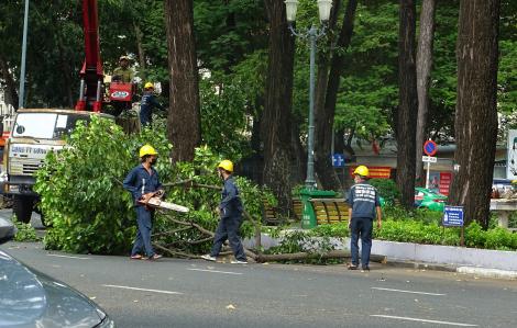 Sài Gòn đang nắng chói chang sao lại cắt tỉa cây xanh?