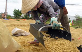Rất khó xảy ra khan hiếm gạo