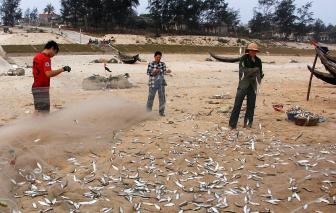 Thừa Thiên - Huế: Tạm ngưng đánh cá, nơi… bóp, nơi… thả
