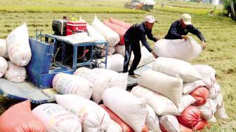 Nên đánh thuế thay vì quyết định cho xuất khẩu gạo hay dừng