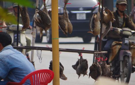 Đủ kiểu tận diệt chim ở Sài Gòn