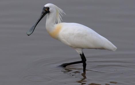 Phát hiện loài chim gần tuyệt chủng ở hồ nước ngọt lớn nhất Trung Quốc