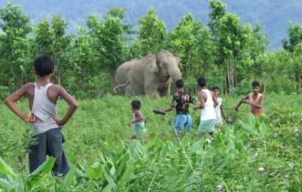 Sức ép từ con người lên động vật hoang dã làm tăng nguy cơ lan truyền bệnh mới