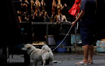 Trung Quốc xem xét cấm tiêu thụ thịt chó