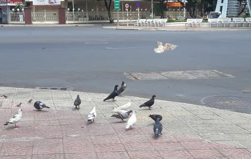 Bầy chim câu trên phố Tây Đô và những ngày thật lạ