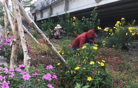 Trồng hoa trong mùa dịch