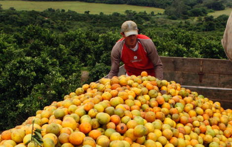 COVID-19 tăng nguy cơ khủng hoảng lương thực