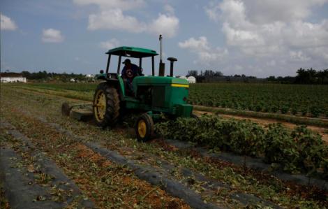 Mỹ viện trợ 19 tỷ USD cho nông dân giữa đại dịch COVID-19