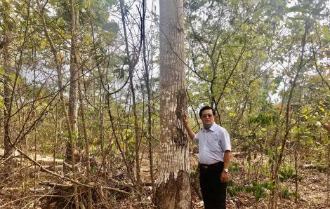 Thực hư thông tin khai thác gỗ tận thu khiến rừng bị phá nát ở Bình Dương
