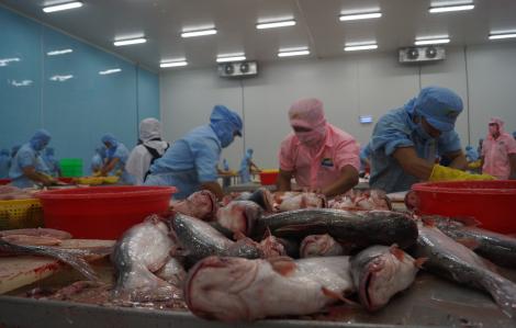 Thuế chống bán phá giá cá tra Việt Nam tại Mỹ giảm mạnh