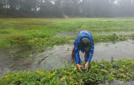 30 tấn dưa hấu bị ngâm trong nước