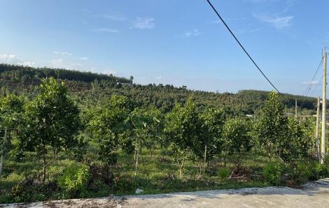 Đồng Nai lập khu tái định cư 18,5 ha cho người dân bị giải tỏa bởi dự án cao tốc Phan Thiết - Dầu Giây