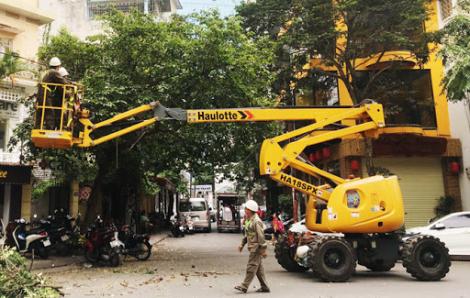TPHCM yêu cầu tổng kiểm tra cây xanh, điện, công trình chống ngập trước mùa mưa bão