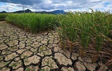 Bình Thuận công bố tình huống khẩn cấp vì hạn hán