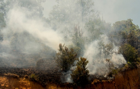 Đang căng mình chống dịch, Indonesia liên tiếp bị cháy rừng