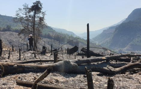 Quảng Nam yêu cầu khẩn trương khởi tố vụ cháy 32ha rừng phòng hộ