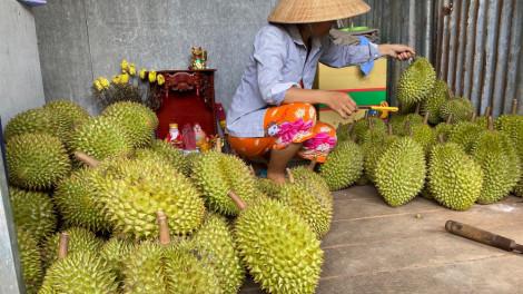 """""""Vua của các loại trái cây"""" đại hạ giá ở vỉa hè Sài Gòn, vì sao?"""