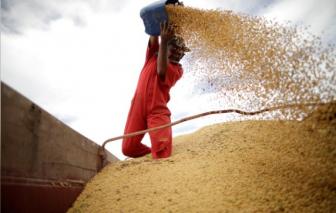 Trung Quốc tăng cường dự trữ lương thực, đề phòng làn sóng COVID-19 tiếp theo