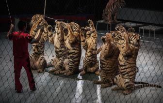 Hàng ngàn động vật hoang dã Nam Phi bị buôn lậu đến Trung Quốc