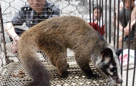 Trung Quốc áp dụng chính sách bồi thường để xóa bỏ nạn buôn bán động vật hoang dã