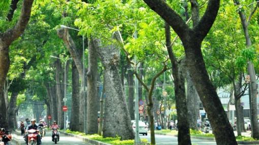 Cây xanh - dấu ấn của Sài Gòn