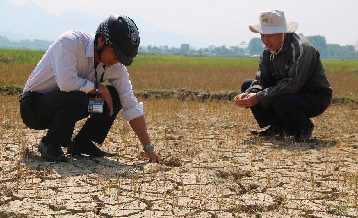 """Cánh đồng  lúa ở xã A Ngo (Huyện A Lưới)  """"chết cháy"""", đất nứt nẻ do hạn nặng."""