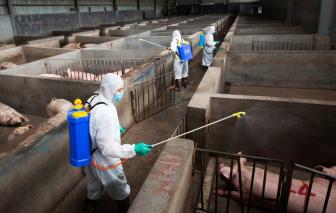 Trung Quốc bắt nhóm bán vắc-xin cúm heo châu Phi giả