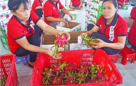 Thái Lan hiện chỉ cho phép nhập khẩu 4 loại trái cây Việt Nam