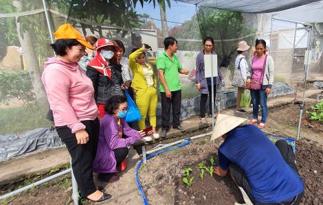 Trồng rau tại nhà: Quan trọng là phải xử lý đất, chọn hạt giống và bón phân