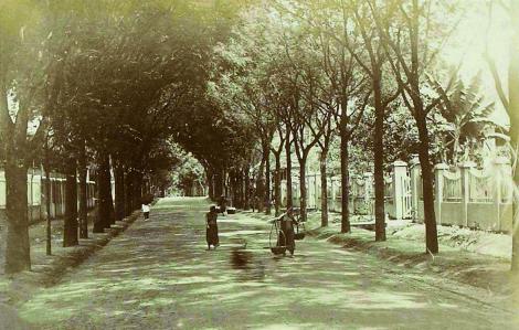 Những hàng cây gìn giữ ký ức đô thị