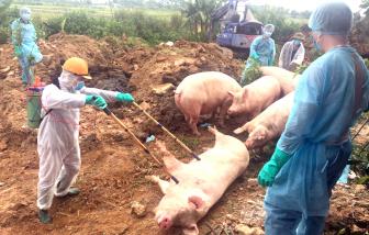 Hộ chăn nuôi heo đối diện vô vàn khó khăn