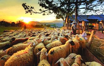 Truyện ngắn - Những con cừu gió