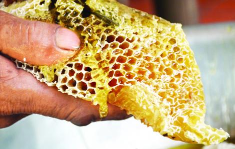 Về U Minh, thử nghề gác kèo ong lấy mật