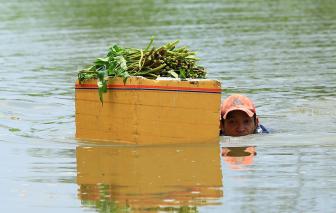 Nghề hái rau muống dại ở Sài Gòn