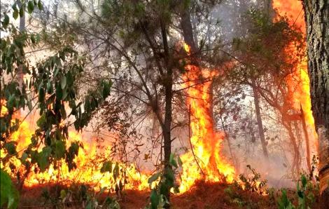 Triệu tập người phụ nữ đốt rác bất cẩn làm cháy rừng thông